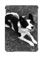 Tootsie border collie cross celpie iPad Air Snap On Case