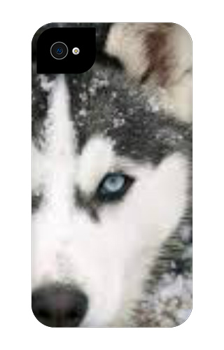 Wolf iPhone 4 Tough Case
