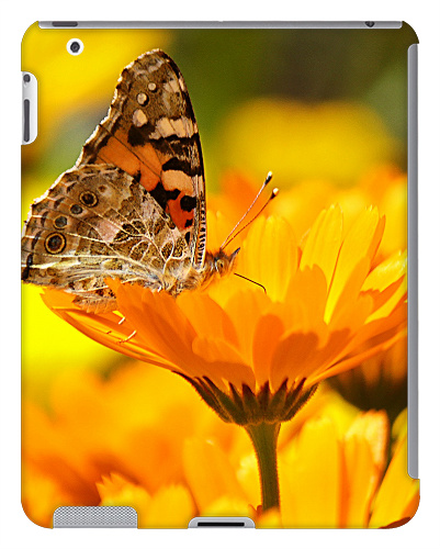 Butterfly on a Flower iPad 2 and 3 Case