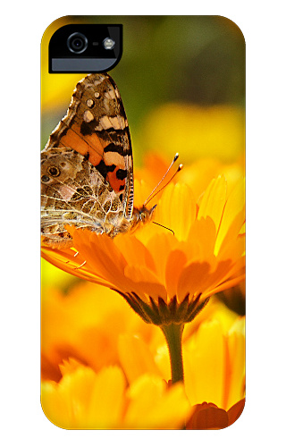 Butterfly on a Flower iPhone 5 and 5s Tough Case